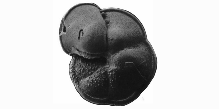 Catalog - Globorotalia praemiocenica