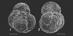 To Mikrotax (Globigerina pseudodruryi Brönnimann & Resig 1971)