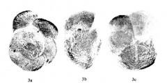 To Mikrotax (Globorotalia saheliana Catalano & Sprovieri 1971)