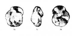 To Mikrotax (Globorotalia praemargaritae Catalano & Sprovieri 1969)