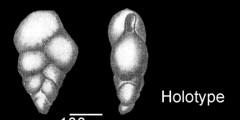 To Mikrotax (Guembelina goodwini Cushman & Jarvis, in Cushman 1933)