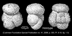 To Mikrotax (Acarinina pseudotopilensis Subbotina 1953)