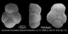 To Mikrotax (Globorotalia wilcoxensis Cushman & Ponton 1932)