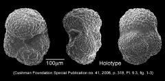 To Mikrotax (Globigerina soldadoensis Bronnimann 1952)
