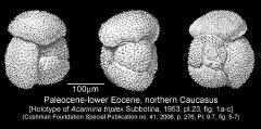 To Mikrotax (Acarinina triplex Subbotina 1953)