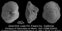 To Mikrotax (Globorotalia rex Martin 1943)
