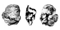To Mikrotax (Globorotalia kolchidica Morozova 1961)