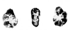 To Mikrotax (Acarinina multiloculata Morozova 1961)