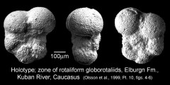 To Mikrotax (Globigerina inconstans Subbotina 1953)