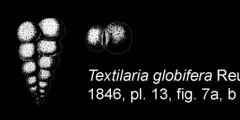 To Mikrotax (Textilaria globifera Reuss 1860)