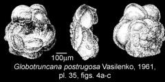 To Mikrotax (Globotruncana postrugosa Vasilenko 1961)