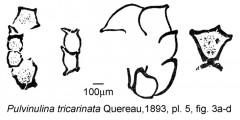 To Mikrotax (Pulvinulina tricarinata Quereau 1893)