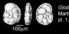 To Mikrotax (Globotruncana erevanica Martirosyan 1958)