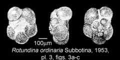To Mikrotax (Rotundina)