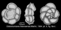To Mikrotax (Globotruncana fresnoensis Martin 1964)