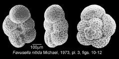 To Mikrotax (FavusellaMichael 1973)