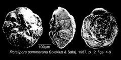 To Mikrotax (Rotalipora pommerana Solakius and Salaj 1987)