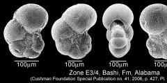 To Mikrotax (Pseudohastigerina wilcoxensis (Cushman & Ponton 1932))